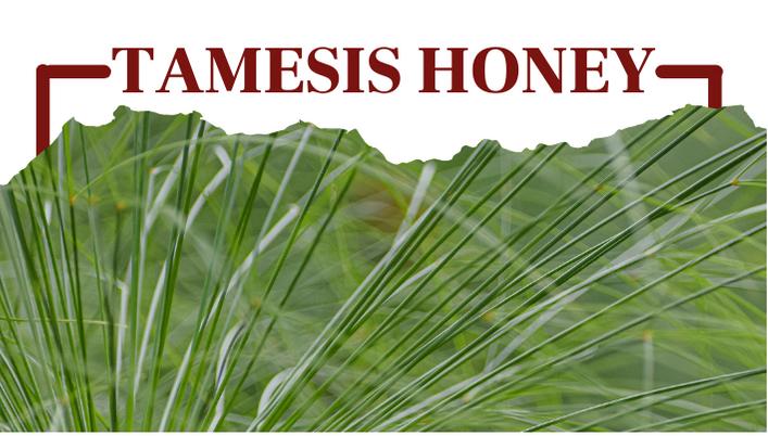 Tamesis Honey