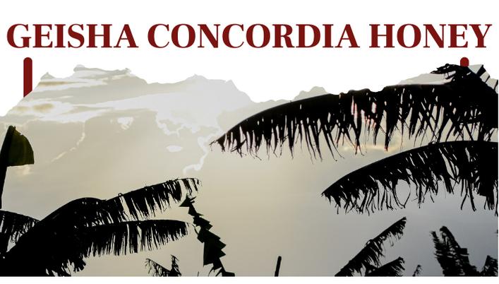 Geisha Concordia Honey