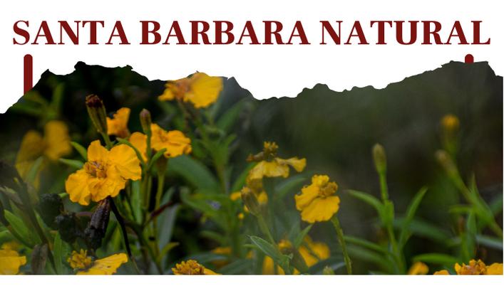 Santa Barbara Natural